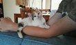 Marie, très belle chatonne tricolore