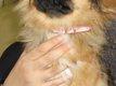 Collier rose pour chiot taille XS en cuir rose