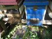 Des collonnies d abeilles noires sur 6 cadres...