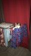 Charlotte chaton femelle perdue