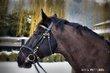 Demi/tiers pension sur cheval professeur adorable