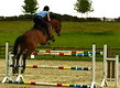 Cours obstacles-dressage/monte/coaching concours