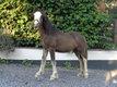 Chic poneys