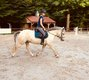 Adorable poney