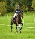 Travail de votre cheval ou cours particulier
