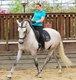 Cheval Pure Race Espagnole - Entier espagnol