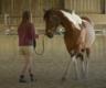 Cours d'équitation et travail au sol