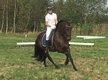 Petit cheval / poney de Pure Race Espagnole