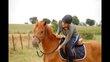 [cherche] demi pension pour jeune cheval