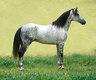 Pension pour chevaux retraités et autres