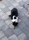 Chat perdu à Malmedy