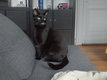 Beau chat noir mâle à donner
