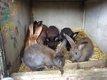 Plusieurs jeunes de lapin