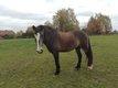Partage avec un super cheval 1à 2X sem - La Hulpe