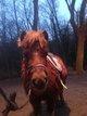 Super poney pour les enfants