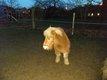 Brave poney de 15ans