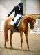 Demi pension cheval sport...