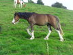 Beau poney
