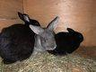 Les lapins disponibles a l'adop