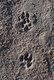 Magnifiques chiots Border Collie noir et blanc
