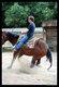 Cours d'équitations, entrainements de chevaux