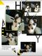 Chiots Husky -