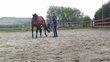 Débourrage chevaux anes poneys region de tournai