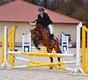 Superbe poney 138cm