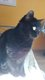 Dory chatte noire à donner