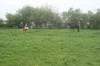 Pensions prairies pour chevaux ou poneys à Enines...