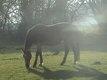 Pension pour chevaux à la retraite- style Paddock...