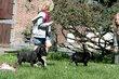 Chiot dogue allemand mâle noir