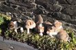 Magnifiques chiots de la ferme du Batis