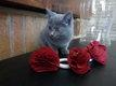 Magnifiques chatons à réserver