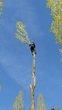 Abattage & élagage arbres, taille, débroussaillage