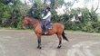 A ceder très bon et gentil cheval professeur