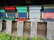 Cause arretmes ruches dadant 12 cadres peuplees