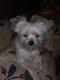 [cherche] dog-sitter pour ma chérie fin août