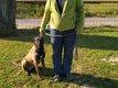 Berger belge malinois mâle de 6 mois