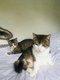 2 chattes, mère et fille à donner