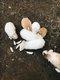 5 lapereaux à la re[cherche] d'une famille