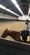 Demie pension pour chouette petit cheval