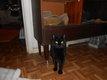 Perdu un très beau chat tout noir avec de beau...