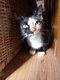 Gentille petite chatte de 1 an sauvée
