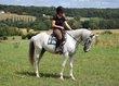 Compeao, Hongre PSLusitanien, 12 ans, super facile