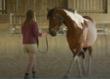 équitation éthologique et dressage