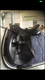 Selle dressage Trainers cuir noir 17,5