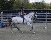 Camaron, Hongre espagnol gris, 11 ans, top cheval