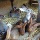 Plusieurs jeunes de lapins