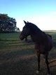 Adorable cheval de promenade [cherche] un tiers...